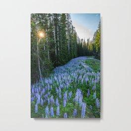 High Country Lupine - Purple Wildflowers in Montana Mountains Metal Print