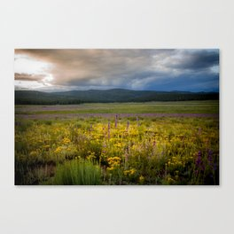 New Mexico Spring flowers Canvas Print