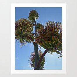 Agave Flower Art Print
