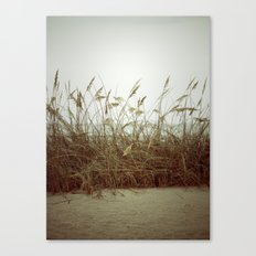 Beach Wheat Grass Canvas Print