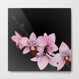 Orchid Mantis Orchids Metal Print