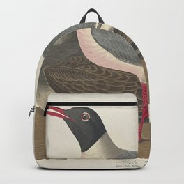 Black-headed Gull from Birds of America (1827) by John James Audubon etched by William Home Lizars Backpack