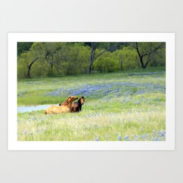 Horses & Bluebonnets Art Print