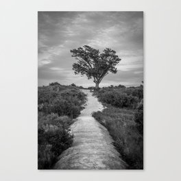 Windswept Tree at Fort Fisher NC -- Black and White Coastal Landscape Canvas Print
