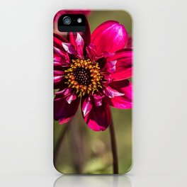 Darling Dahlia iPhone Case