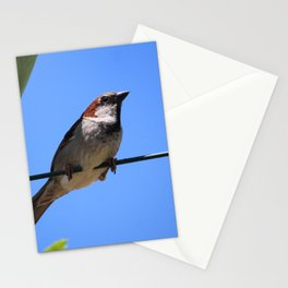 Red Robin Close Up Stationery Cards