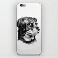 rottweiler iPhone & iPod Skins featuring Rottweiler Devotion by Patricia Howitt
