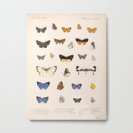 Vintage Hand Drawn Scientific Illustration Insects Butterfly Anatomy Colorful Wings Metal Print