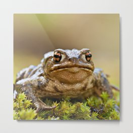 Portrait of a common frog Metal Print