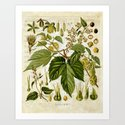 Common Hop Botanical Print on Vintage almanac collage by paperrescuedesigns