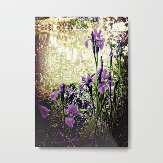 Purple Irises Metal Print