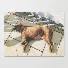 Sleeping Dogs Canvas Print