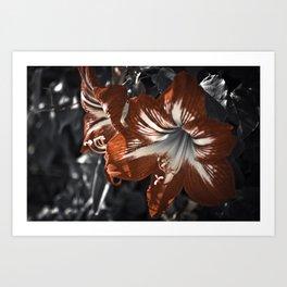 The Blooming Desert Art Print