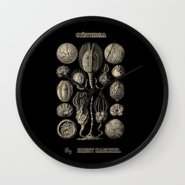 """""""Cystoidea"""" from """"Art Forms of Nature"""" by Ernst Haeckel Wall Clock"""