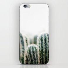 Cactus 1 iPhone & iPod Skin