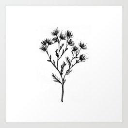 Wild Carrot Wildflower Art Print