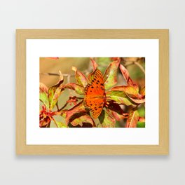 Butterfly In The Glades - Gulf Fritillary Framed Art Print