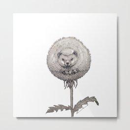 Garden hedgehog Metal Print