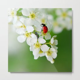 Ladybug spring 65 Metal Print