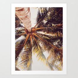 Yucatan Palmera Art Print