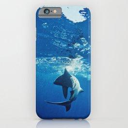 Shark Swimming iPhone Case