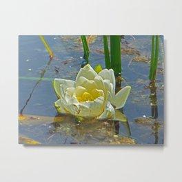 Blue Damselfly Aquatic Lily Metal Print
