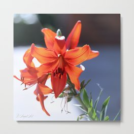 Lilies In The Spotlight Metal Print