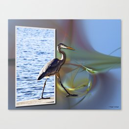 Blue Heron Strutting Out Of Frame Canvas Print