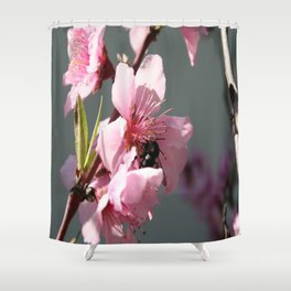 Unidentified Winged Insect On Peach Tree Blossom Shower Curtain