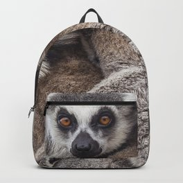 Lemur catta animals Backpack