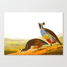 Scientific Bird Illustration Canvas Print