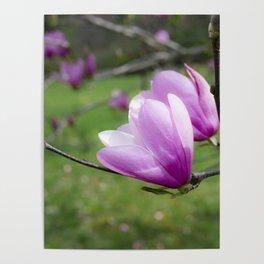 Tulip Flower on Tree Poster