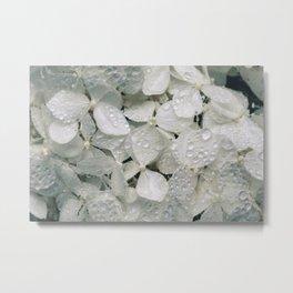 Hortênsias brancas com água Metal Print