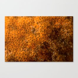 The bubble star Canvas Print