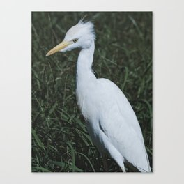 Wild Heron Canvas Print