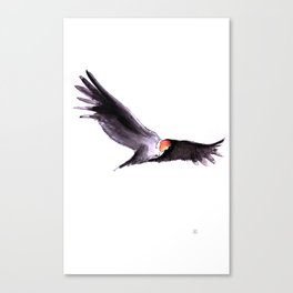 Condor Canvas Print