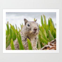 Surprised Sweet Animal Art Print