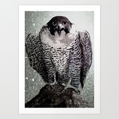falcon 2 Art Print