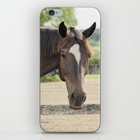 charlie iPhone & iPod Skins featuring Charlie by Images by Nicole Simmons