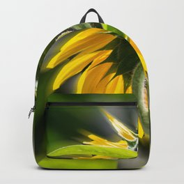 The sunflower from behind Backpack