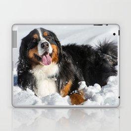 Happy Bernese Mountain Dog in the Snow Laptop & iPad Skin