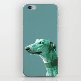 Green Greyhound. Pop Art portrait. iPhone Skin