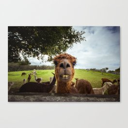 Sup wit chu? Canvas Print
