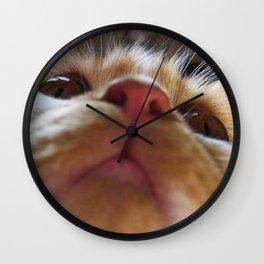 Funny Cute Cat Macro Eyes Wall Clock