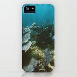 Mexican Caribbean Sealife iPhone Case