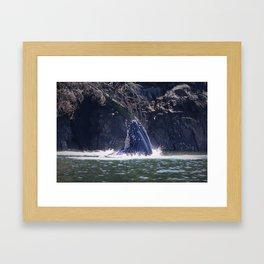 Humpback whale eating Framed Art Print