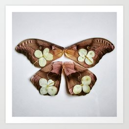 Moth with Yellow Flowers Art Print