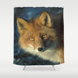 Red Fox in the Wild Shower Curtain