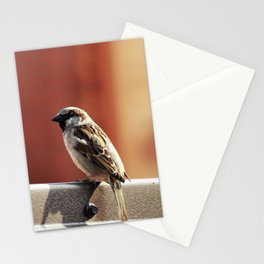 mr sparrow Stationery Cards