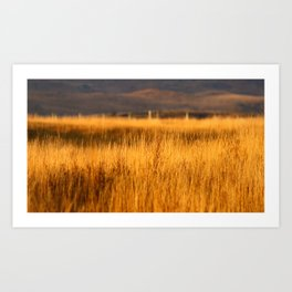 Golden grasses Art Print